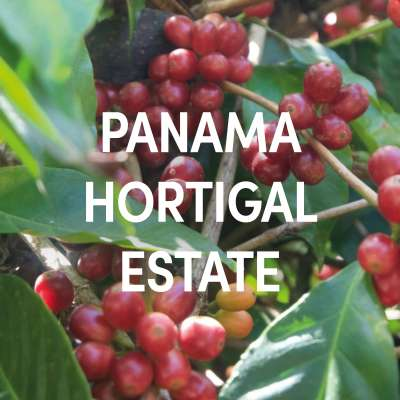 Panama Hortigal Estate Single Origin Filter
