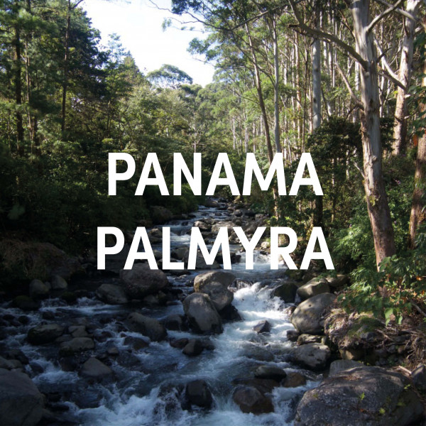 Panama Palmyra Estate Single Origin Filter
