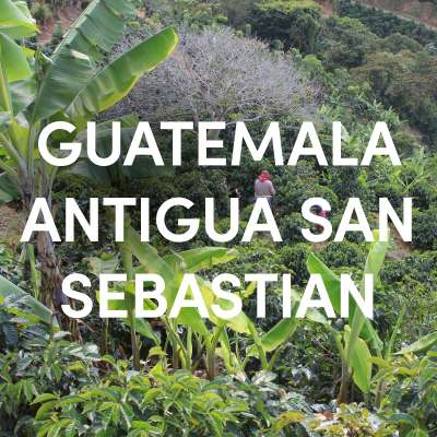 Guatemala Antigua San Sebastian Single Origin Filter