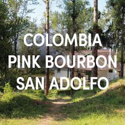 Colombia Pink Bourbon San Adolfo Single Origin Filter