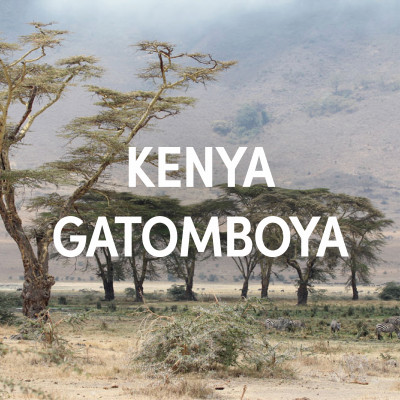 Kenya Gatomboya AA Top Single Origin Filter