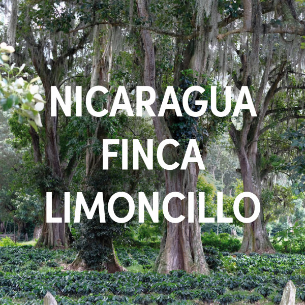 Nicaragua Finca Limoncillo Single Origin Filter