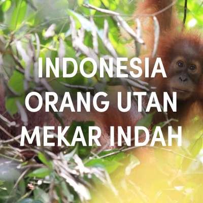 Indonesia Orang Utan Mekar Indah Single Origin Espresso