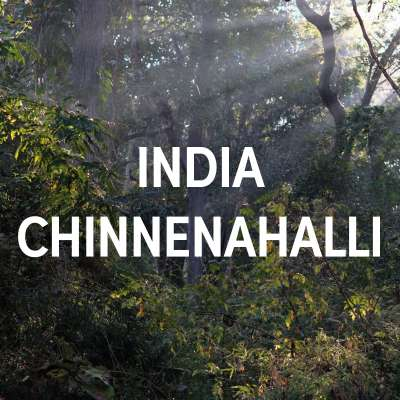 India Chinnenahalli Single Origin Espresso