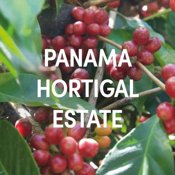 Panama Hortigal Estate Single Origin